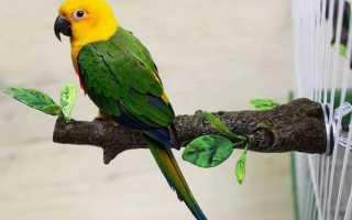 Жердочки для попугаев, присады своими руками