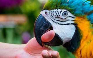 Почему попугаи кусаются и как их отучить от этого?