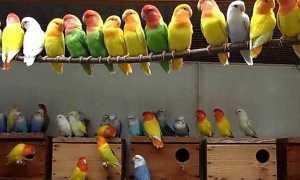 Гнездо (домик) для неразлучников: виды, способы сделать своими руками