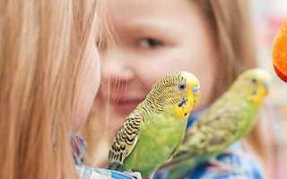 Аллергия на попугаев: как проявляется, лечение