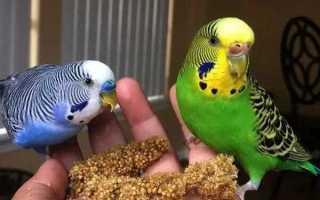 Витамины для попугаев, минеральные смеси