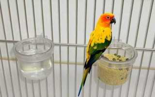 Поилки и кормушки для попугаев: достоинства и недостатки