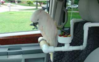 Как перевозить попугая?