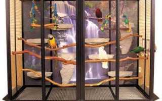 Вольер для попугаев своими руками для квартиры и улицы