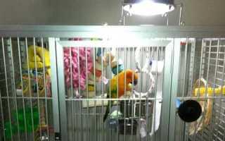 Какая лампа для попугаев лучше: ультрафиолетовая, светодиодная или соляная