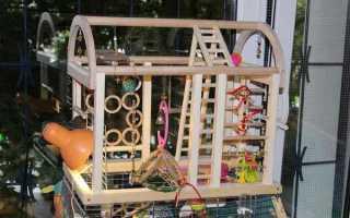 Стенды для попугаев: покупные и сделанные своими руками