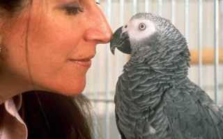 Самый умный попугай на планете — жако Алекс
