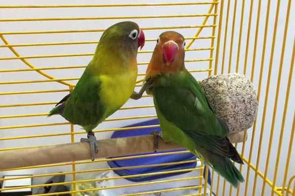 минеральный камень для двух птиц фишера