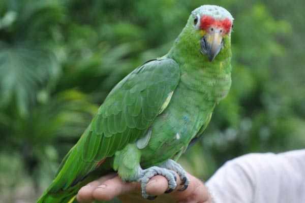 попугай сидит на руке человека