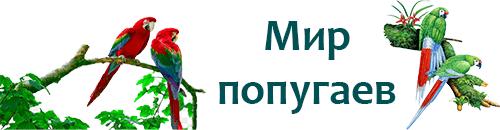 100popugaev.ru