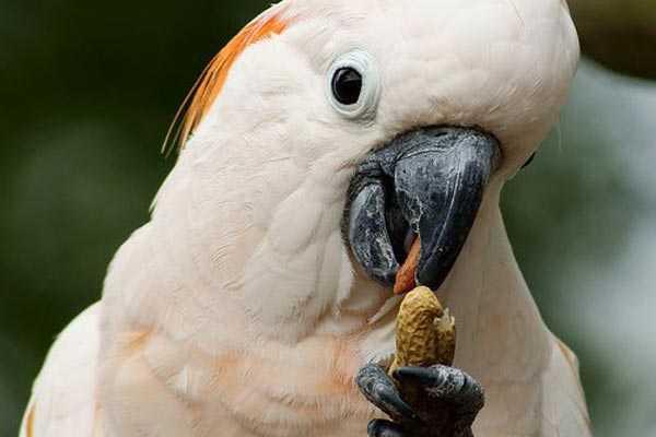 птица ест арахис