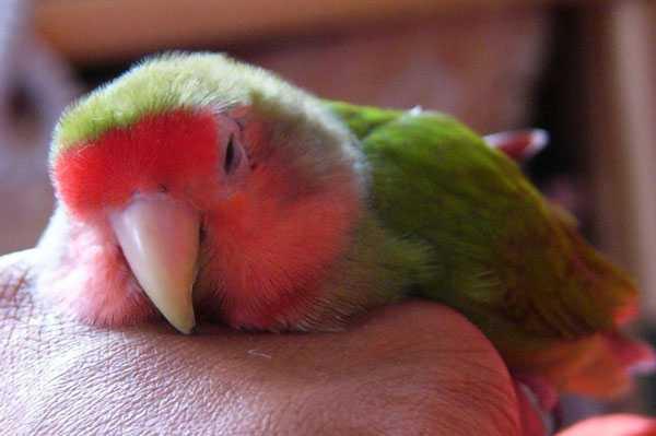 птица спит в руке