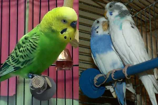 попугаи с длинными когтями сидят на жердочках