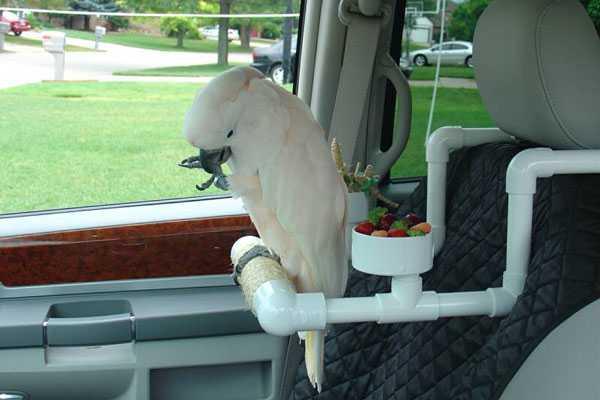 способ перевозки попугая какаду в машине