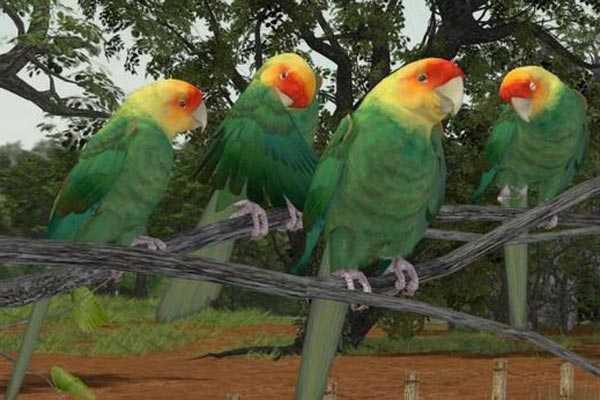 стайка каролинских попугаев на ветке