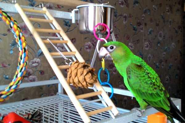 игрушки для конголезского попугая