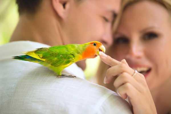 попугай сидит на плече и кусает за палец