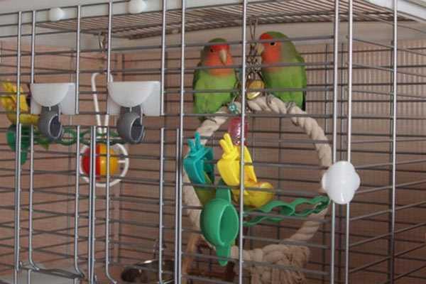 два попугая в клетке
