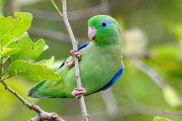 птица на ветке держится лапками