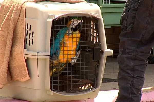 переноска для ара и других крупных попугаев
