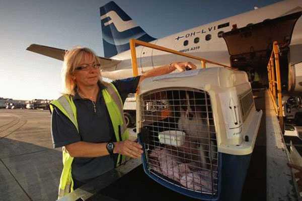 как перевозят попугаев в самолетах