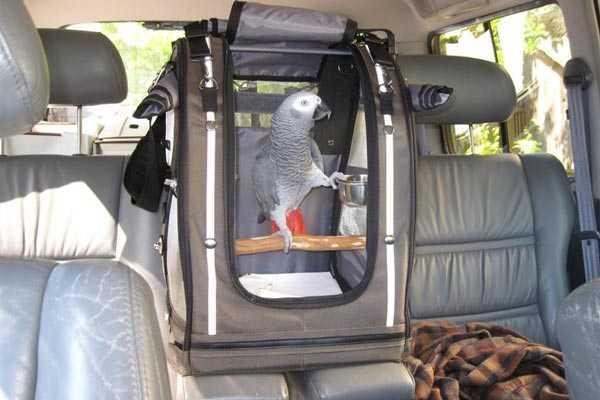 переноска для путешествия жако в машине