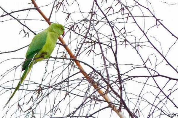 попугай сидит на ветке на улице