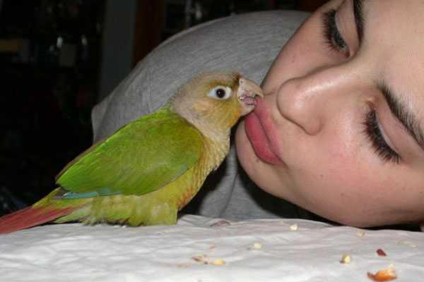 человек и попугай