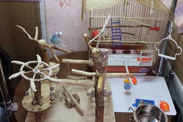 оригинальный стенд для птиц своими руками