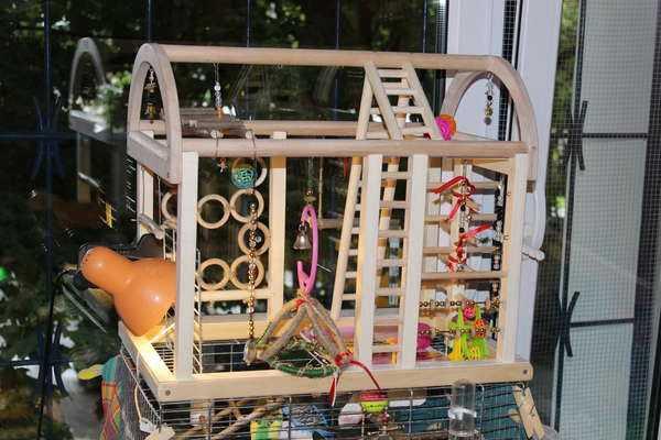 деревянный стенд для попугаев