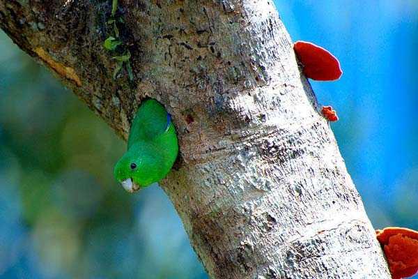 воробьиный попугай в дупле дерева