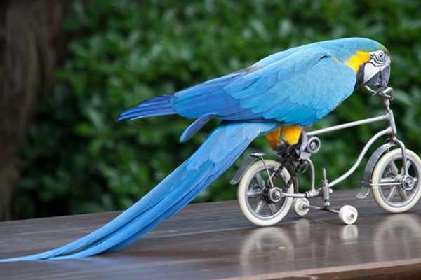 картинка попугай катается на велосипеде