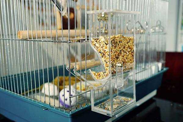 Автокормушка (бункерная) для попугаев