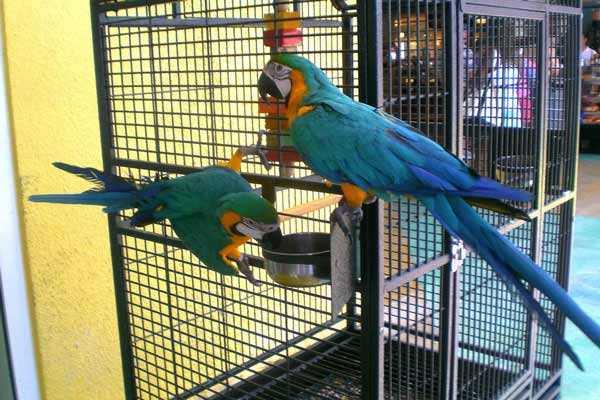 клетка-вольер для больших попугаев ара