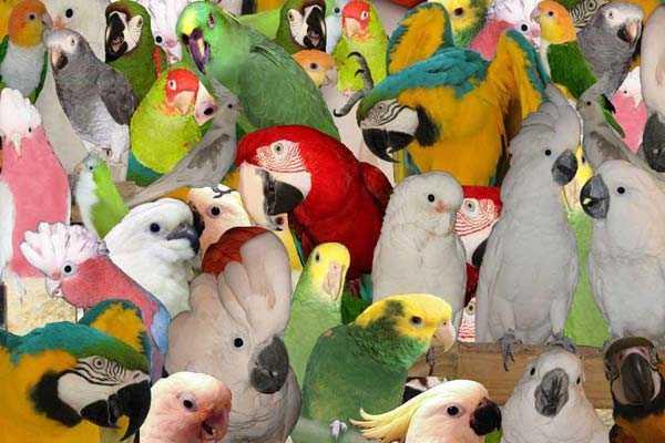 большие и маленькие попугаи