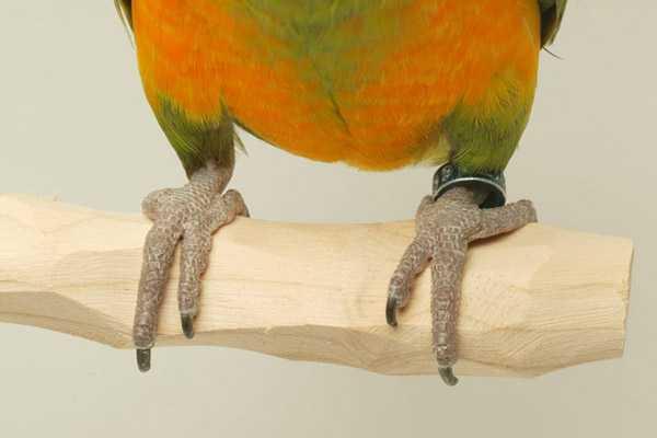 деревянная жердочка для попугая