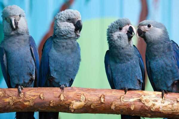 взрослая особь и три молодых птенца