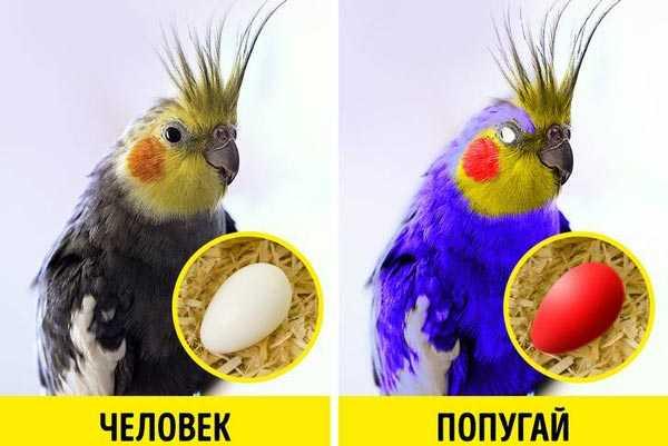 как видит попугай и человек