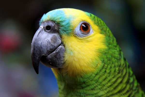 глаза у попугая расположены по обе стороны головы