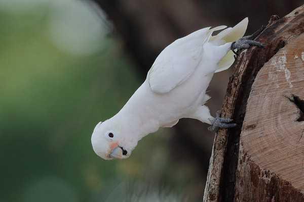 попугай сидит на стволе дерева