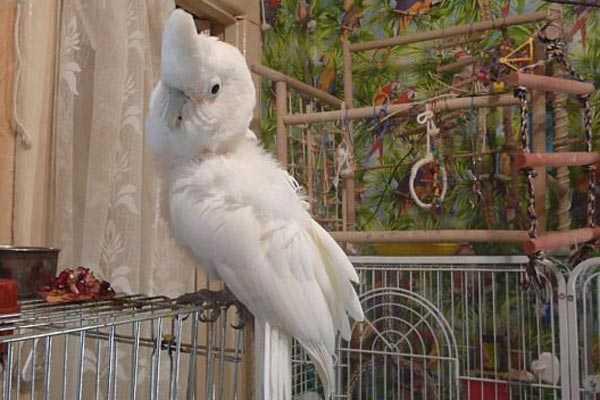 попугай сидит на клетке