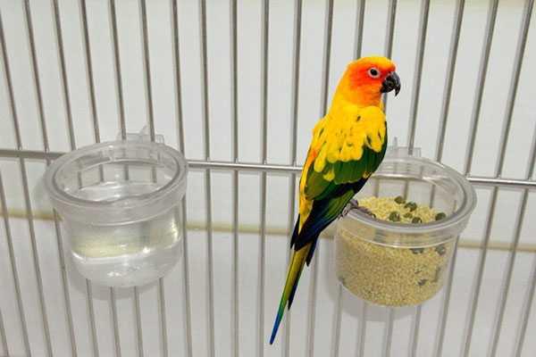 кормушка и поилка для попугая аратинги