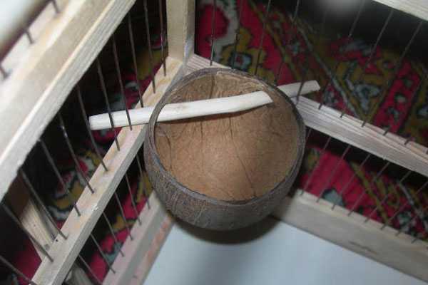 самодельная кормушка из кокоса и веточки
