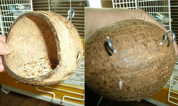 самодельная кормушка из кокоса