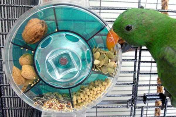 оригинальная кормушка для попугая