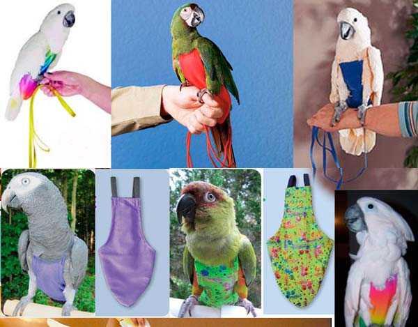 костюмы с поводком для попугаев
