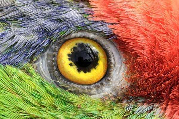 глаза попугая не способны видеть в темноте
