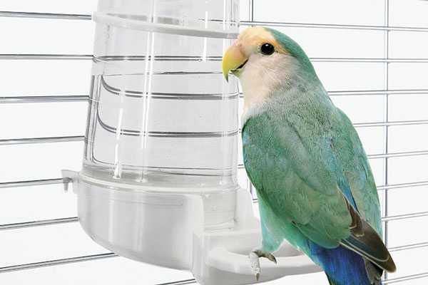 птица пьет воду из поильника