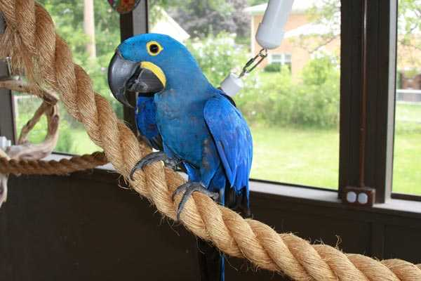 попугай ара в вольере на канате