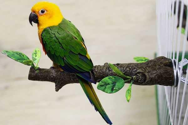 попугай сидит на жердочке